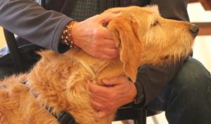 (Français) Formation professionelle Tellington TTouch® - Coach pour chiens et animaux de compagnie, module 9_4 @ Bioschwand | Münsingen | Bern | Suisse