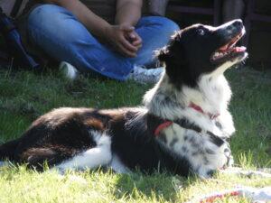 [:de]Tellington TTouch, Klang und Farben für Sie und für Ihren Hund - Basiskurs[:] @ Bioschwand | Münsingen | Bern | Schweiz