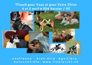 [:fr]Tellington TTouch pour votre chien et pour vous - Cours de Base à 1214 Vernier / Genève[:] @ sera communiqué ulterieurement | Lausanne | Vaud | Schweiz