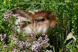 [:fr]La journée des lapins[:] @ SVPA Lausanne | Lausanne | Vaud | Schweiz