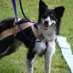 [:fr]Initiation au Tellington TTouch pour vous et pour votre chien en Belgique[:] @ Hoops-Dog | Genappe | Wallonie | Belgique