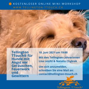 (Deutsch) Kostenloser Online Mini-Workshop: TTouch für Hunde mit Angst vor Geräuschen, Feuerwerk und Gewittern