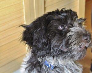 [:fr]L'Animal enchanté : Mieux vivre avec un chien hautement sensible[:] @ Haute Savoie - Genève