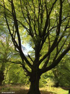 [:fr]L'arbre de vie - La vie d'arbre[:] @ Haute Savoie - Genève
